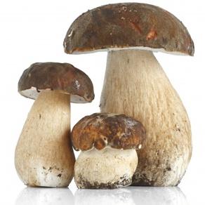 ciuperci proteine 100g)